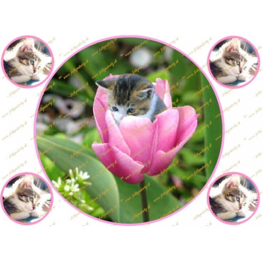 Jedlý obrázok na tortu mačiatko v ružovom tulipáne